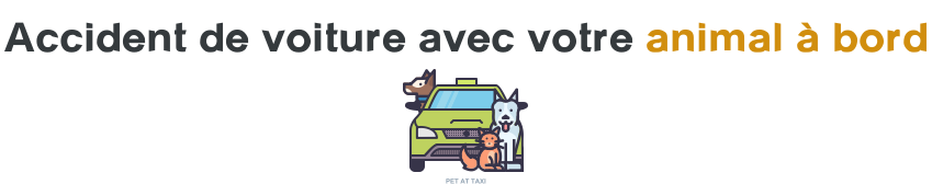 accident voiture animaux a bord