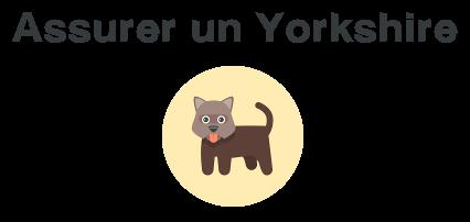 assurer yorkshire