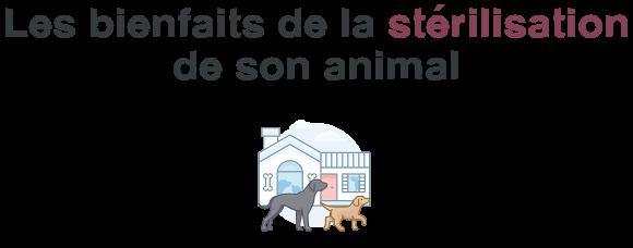 avantage steriliser animal