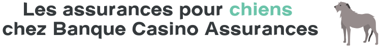 banque casino assurance chiens