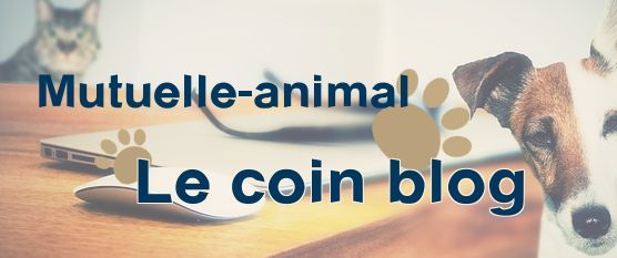 blog mutuelle-animal