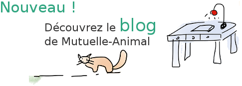 blog mutuelle animal