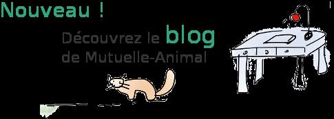 blog mutuelle animal