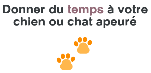 chien chat apeure