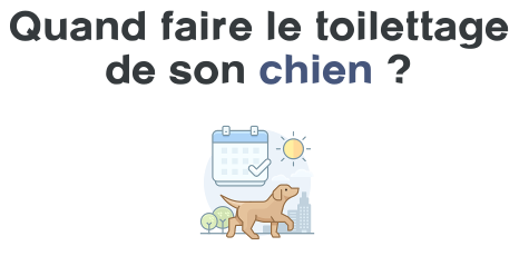 frequence toilettage chien
