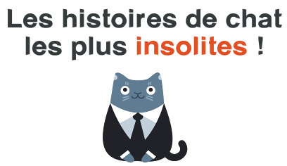 histoire chat insolite