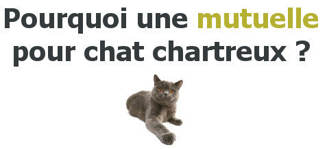 mutuelle chat chartreux