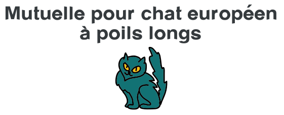 mutuelle chat europeen poil long
