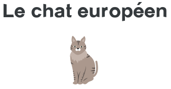 mutuelle chat europeen