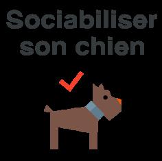 sociabiliser chien