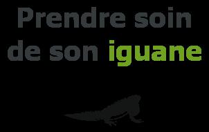 soin iguane