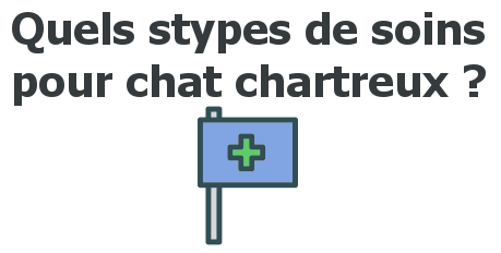 soins chat chartreux