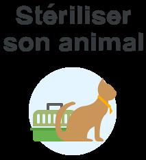steriliastion animal