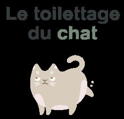 toilettage chat